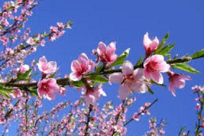 Mùa Xuân, mùa khởi đầu của sự sống