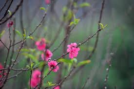 Những cánh hoa trong thi ca